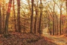 Robert Frost Trail Fall
