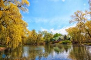 Springtime Pond